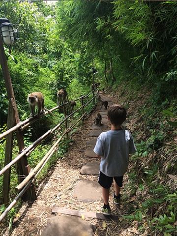 Monkey Trail Krabi Thailand